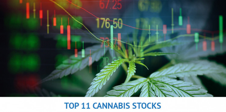 The 11 Best Performing Cannabis Stocks Of 2020