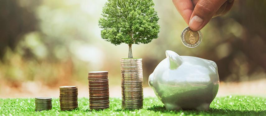 Understanding Greenfield Investments