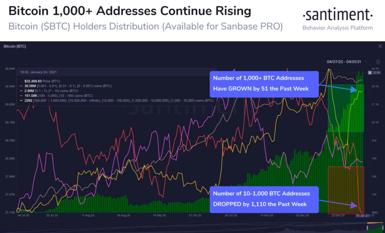 bitcoin adresses  chart 010521